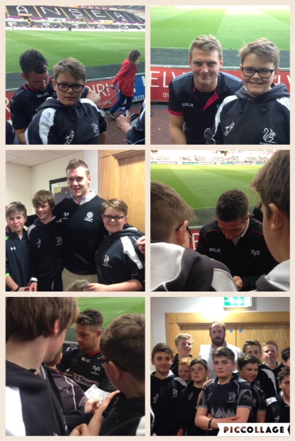 Ospreys collage